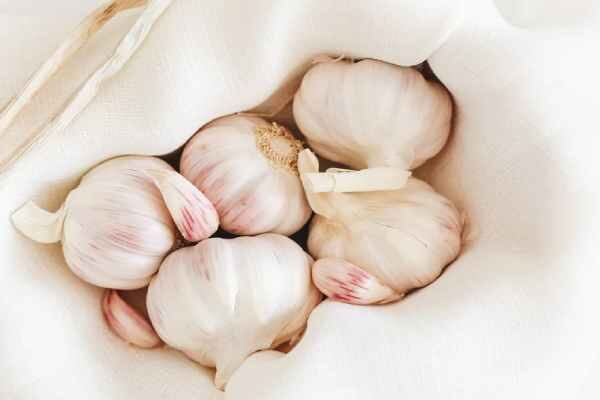 Signs of poisonous garlic, its harm and side effects